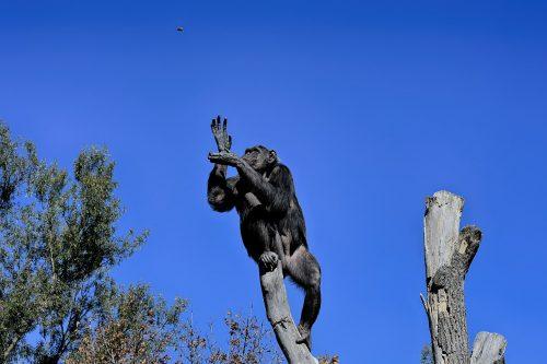 Ist er nur ein arroganter Affe, der abgehoben ist und ganz hoch oben sitzt?