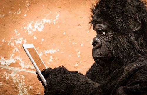 Manchmal ist der Typ am anderen Ende der Nachricht ein blöder Affe.