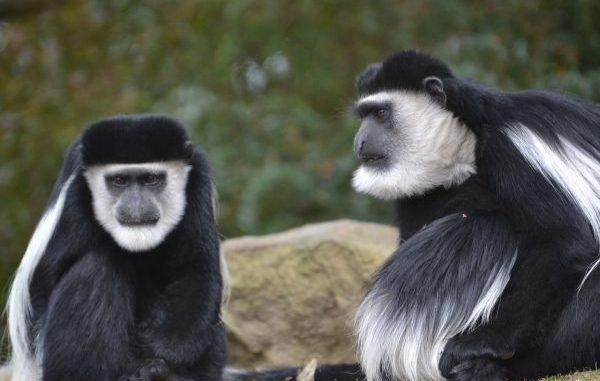 Warum interessieren sich immer nur die blöden Affen für mich?