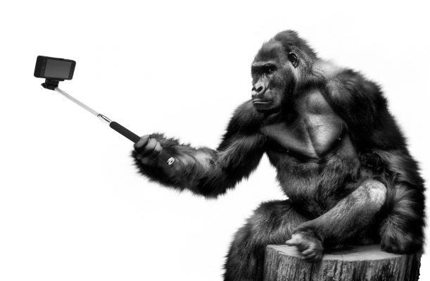 Bist du ein Narzisst, ein eingebildeter arroganter Affe?
